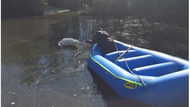 Virginia fire crews rescue dog stranded on icy pond