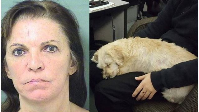 Police: Dog rescued after being tied up, thrown into water by owner