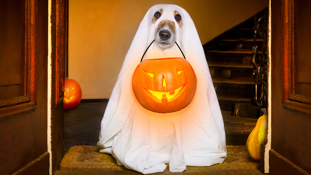 Funny costume ideas for dogs