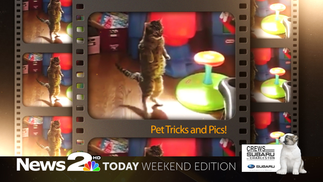 Make your pet a star! Pet Trick and Pics contest