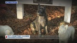 Call Collett: Pet Cemetery closes, pet owners stunned