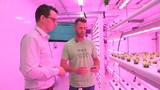 Growing local lettuce the smart, safe, and sustainable way
