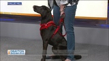 Pets on 2: Drayton is ready for a new home and a little training