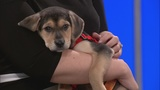 Pets on 2: Brother and sister puppies ready for adoption at Pet Helpers
