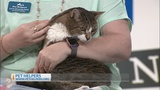 Pets on 2: Sweet and cuddly Naomi is ready for a forever home